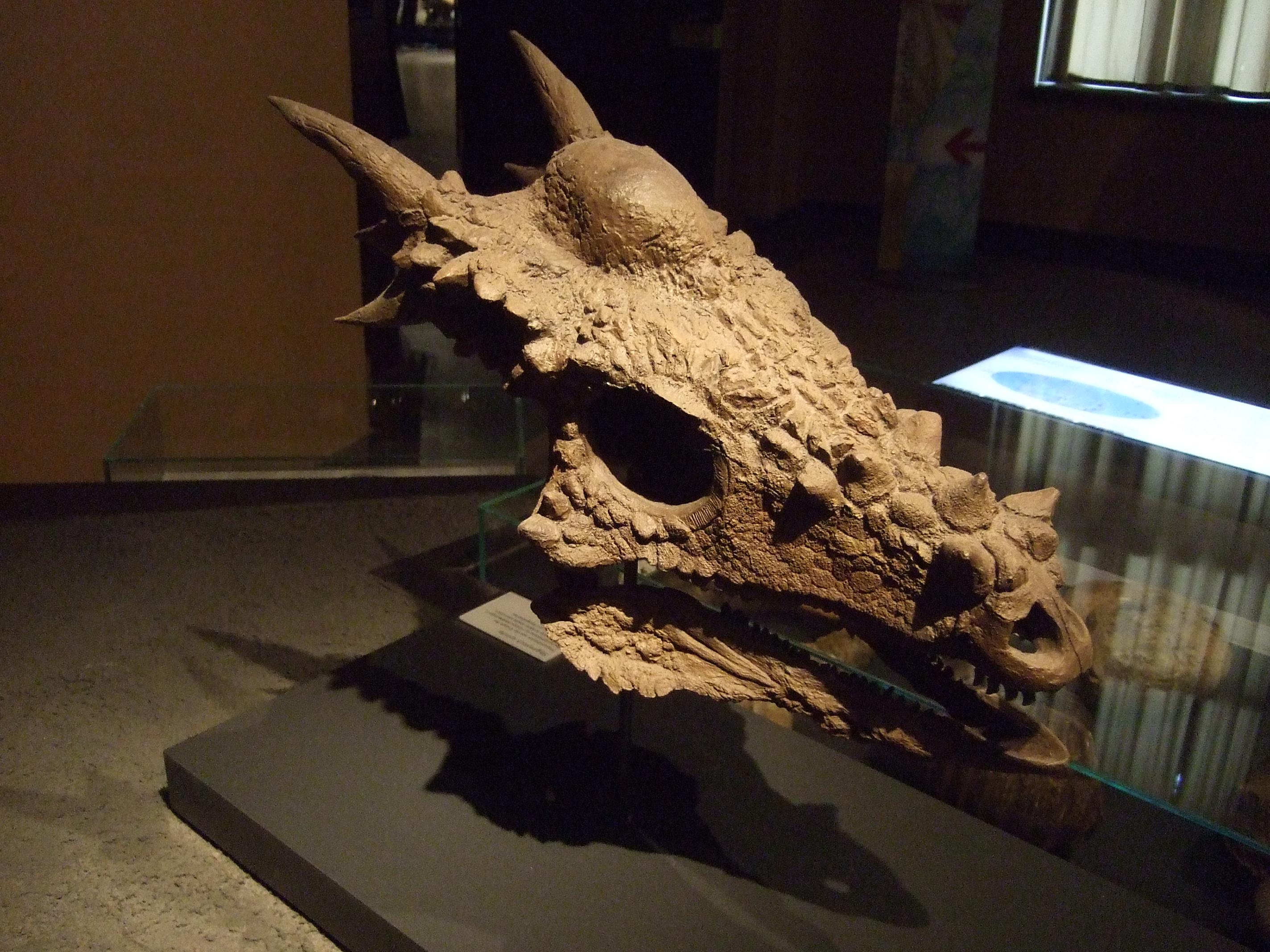 Image Gallery stygimoloch skull