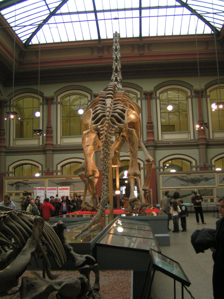 Naturkundemuseum Berlin.jpg