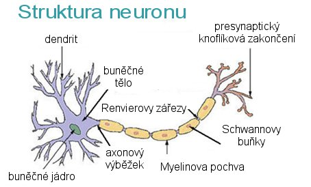 Dendrite biologie  Wikipédia
