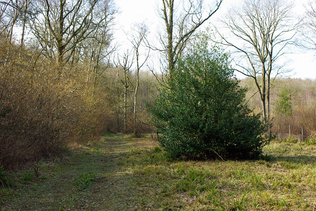 Path in Glover's Wood - geograph.org.uk - 1756541