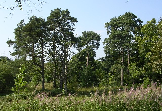 List Types of Pine Trees http://commons.wikimedia.org/wiki/File:Pine_Trees_at_Auchnacraig_-_geograph.org.uk_-_49155.jpg