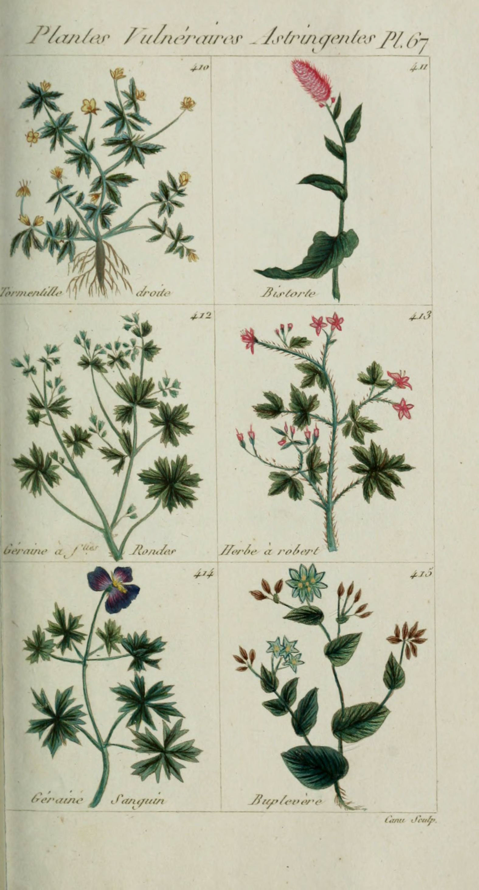 File plantes usuelles indig nes et exotiques pl 67 for Plante exotique