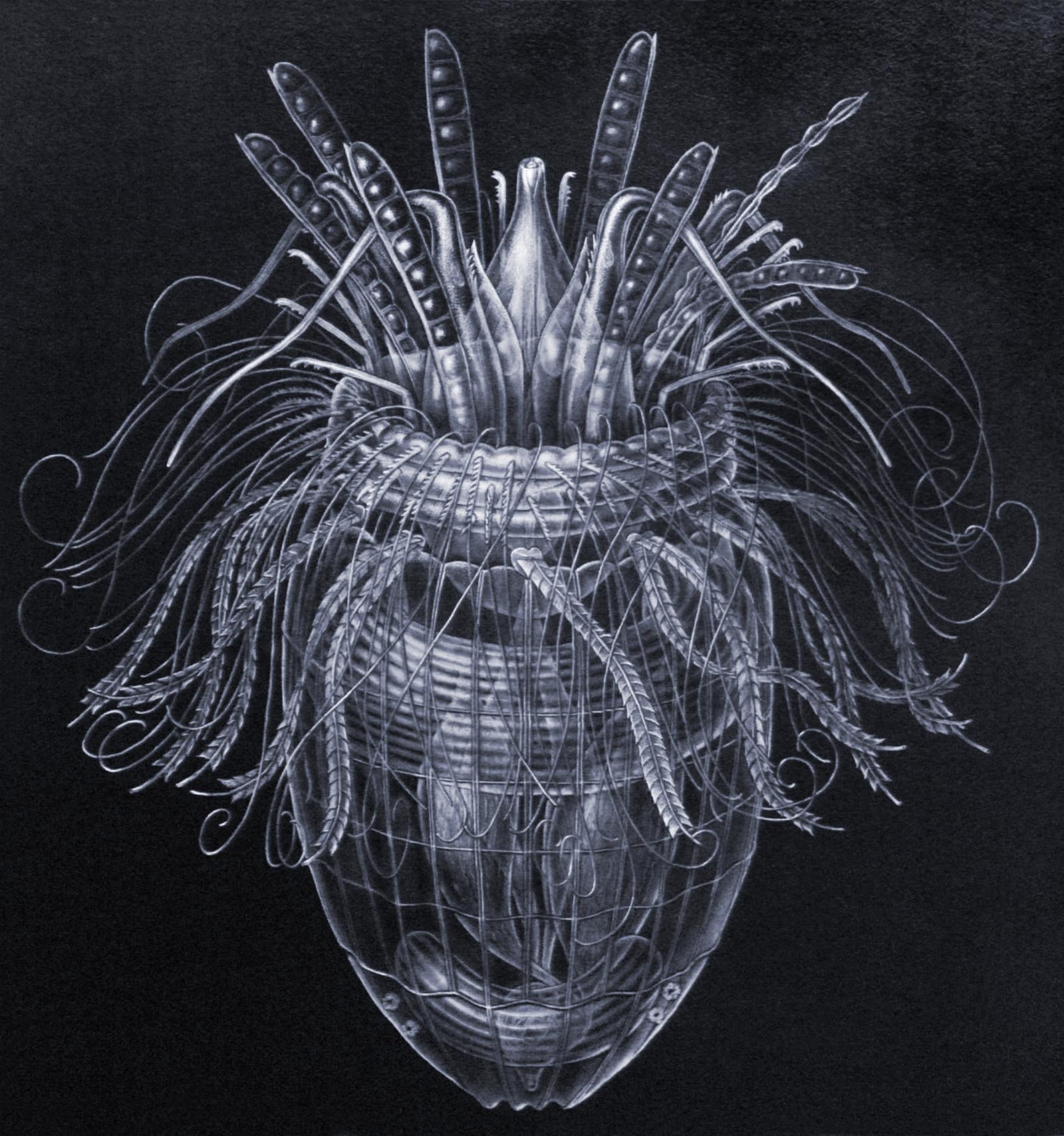 Pliciloricus enigmatus, a Loriciferan