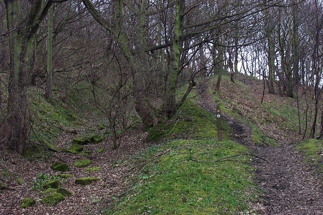 Quarry Track and Footpaths in Strangstry Wood - geograph.org.uk - 716506