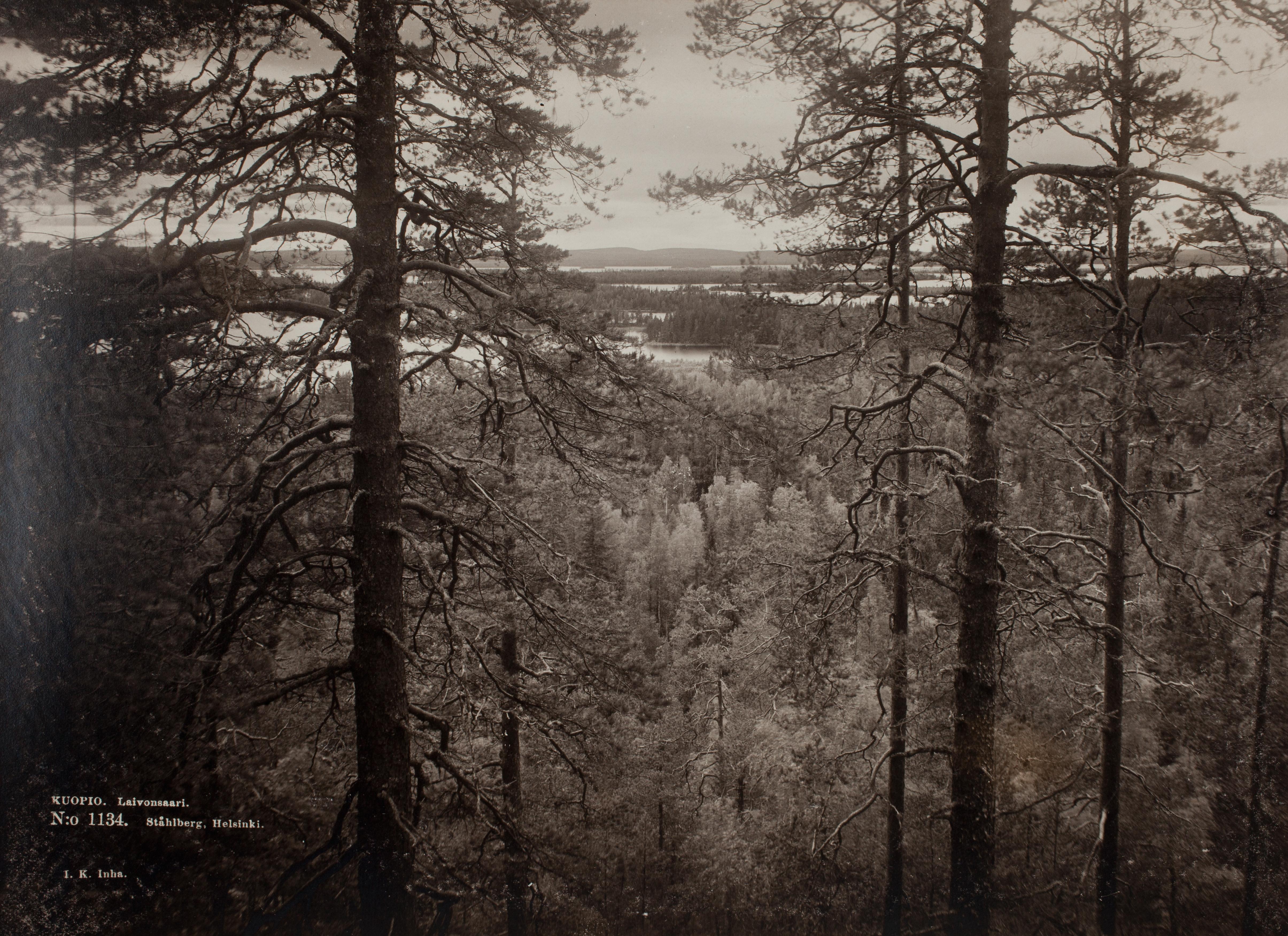 Floresta em Laivonsaari, uma ilha de um lado perto de Kuopio, no centro-leste da Finlândia [c. 1893]