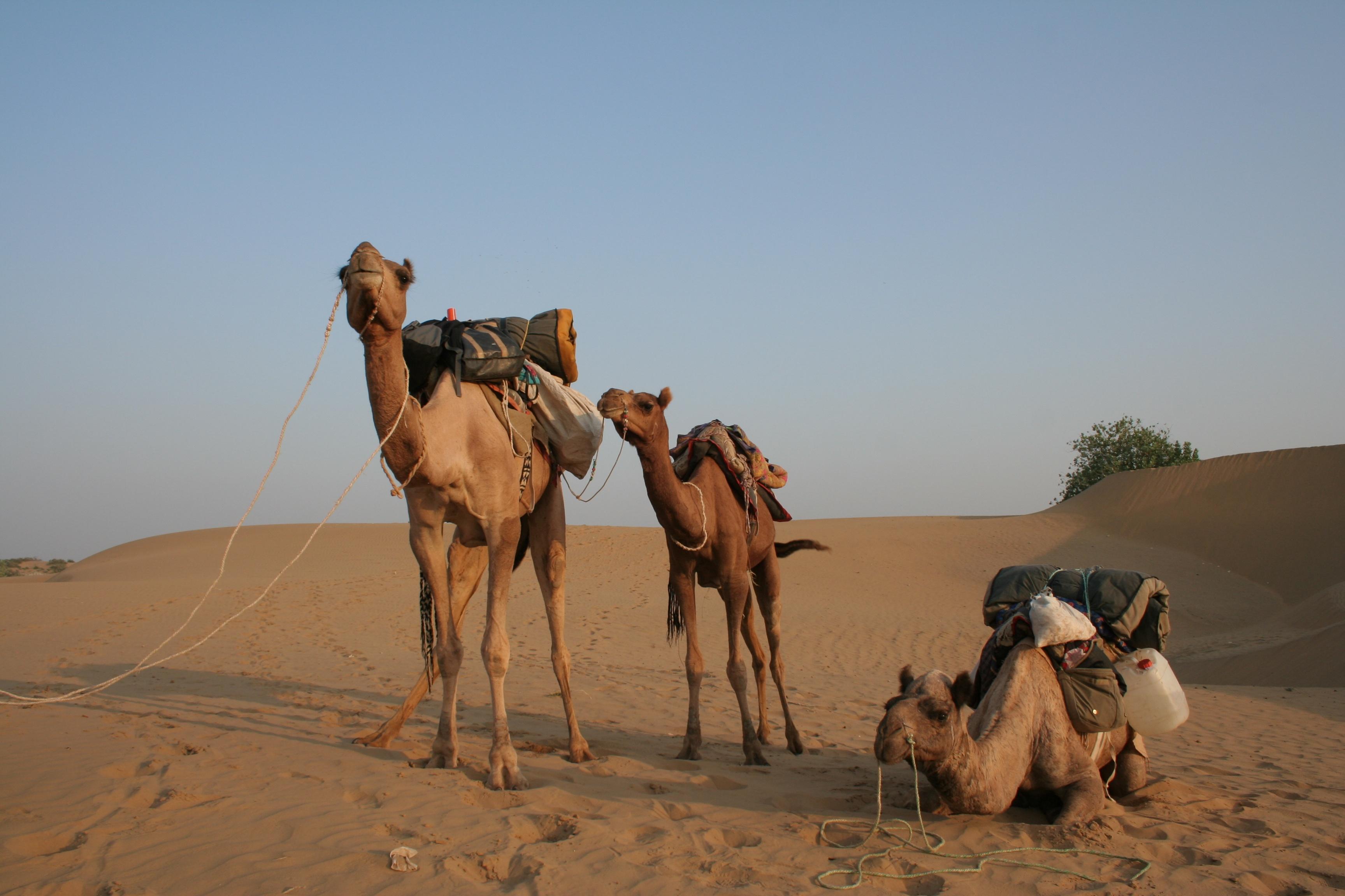File:Thar Desert (6652766323).jpg - Wikimedia Commons
