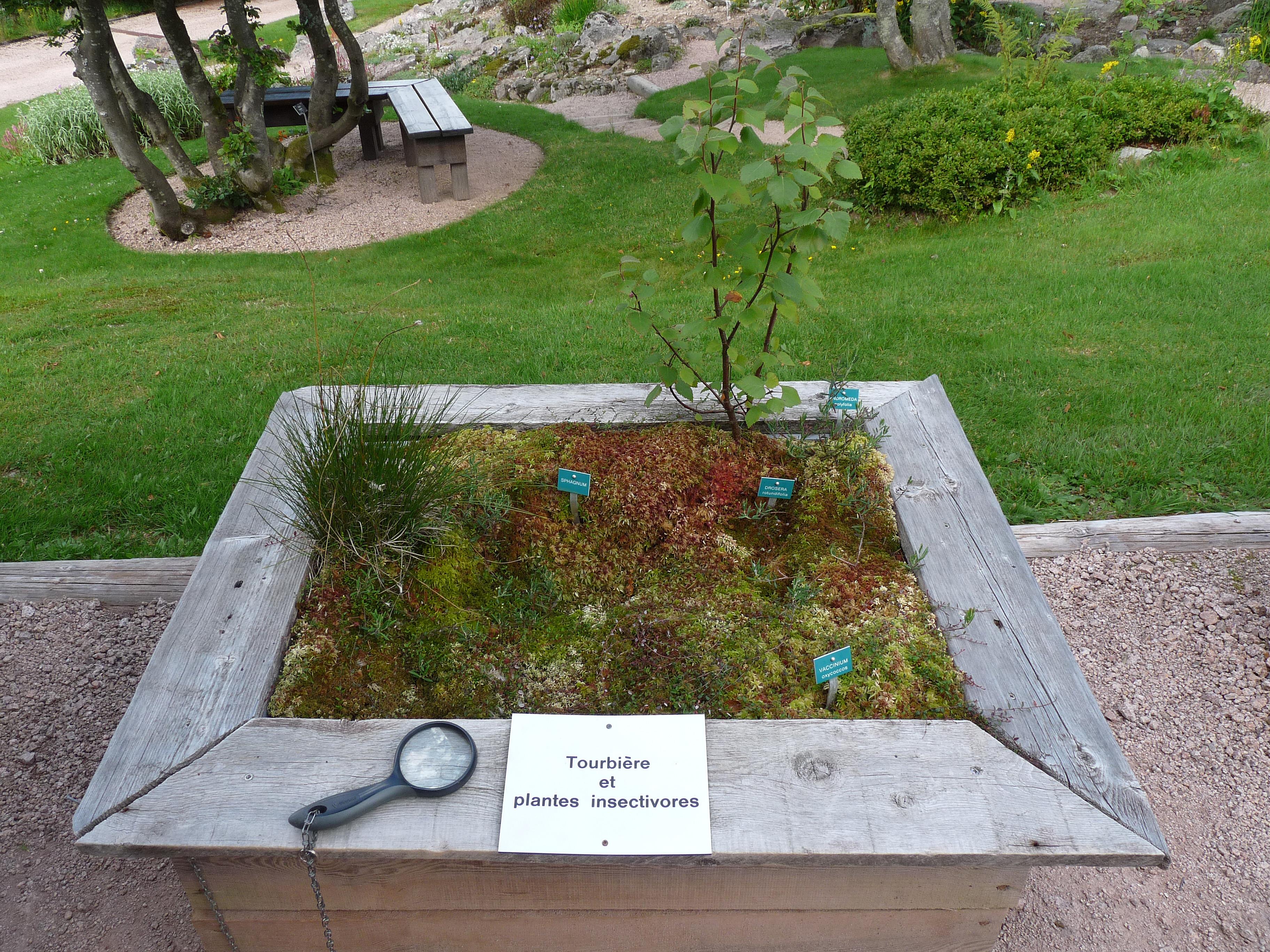 File tourbi re et plantes insectivores jardin d 39 altitude - Jardin d altitude du haut chitelet ...