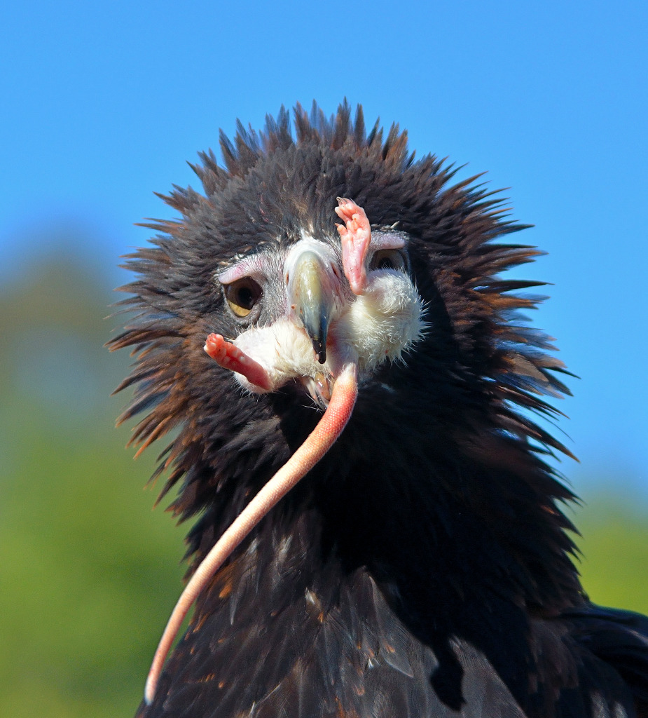 Image Result For Eagles
