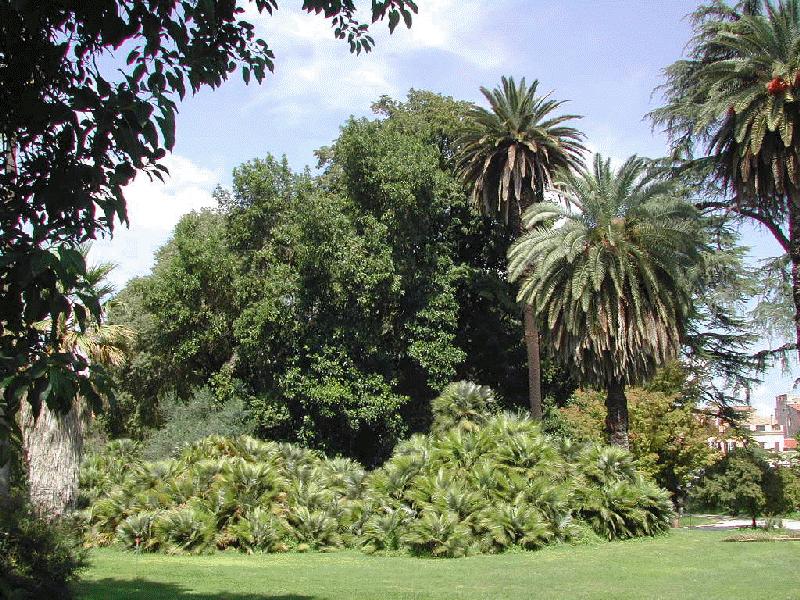 Dans le jardin botanique de Rome.