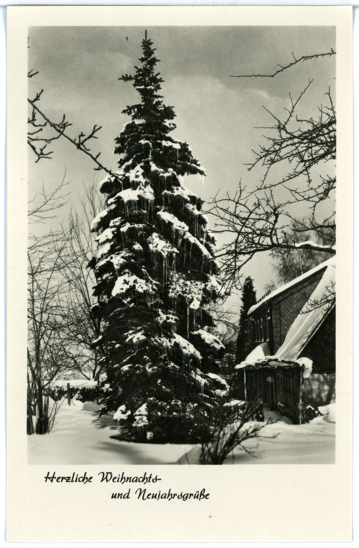 file 29145 sohland 1956 tanne im winter weihnachtsgr e. Black Bedroom Furniture Sets. Home Design Ideas