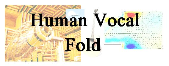 Acoustics human vocal fold.JPG