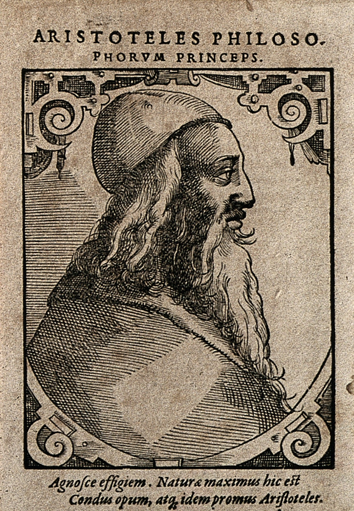 File:Aristotle. Woodcut by T. Stimmer (?), 1589. Wellcome