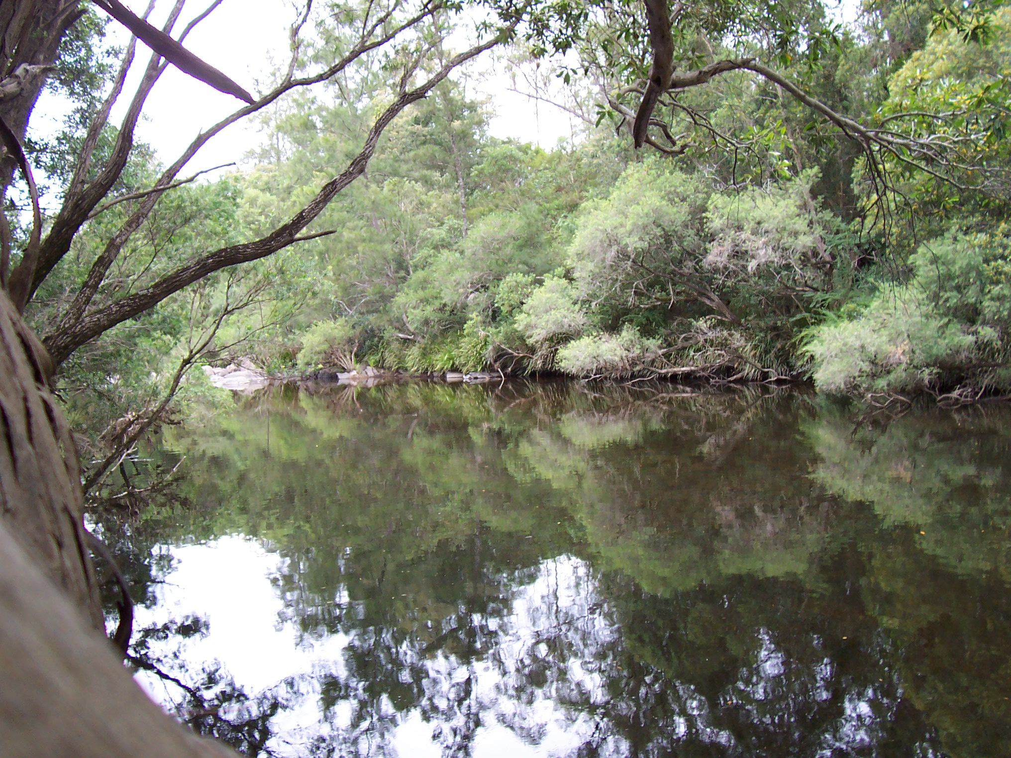 File:Australian bush river reflection.jpg - Wikipedia, the free ...