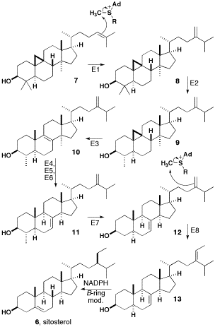 mesterolone mechanism of action