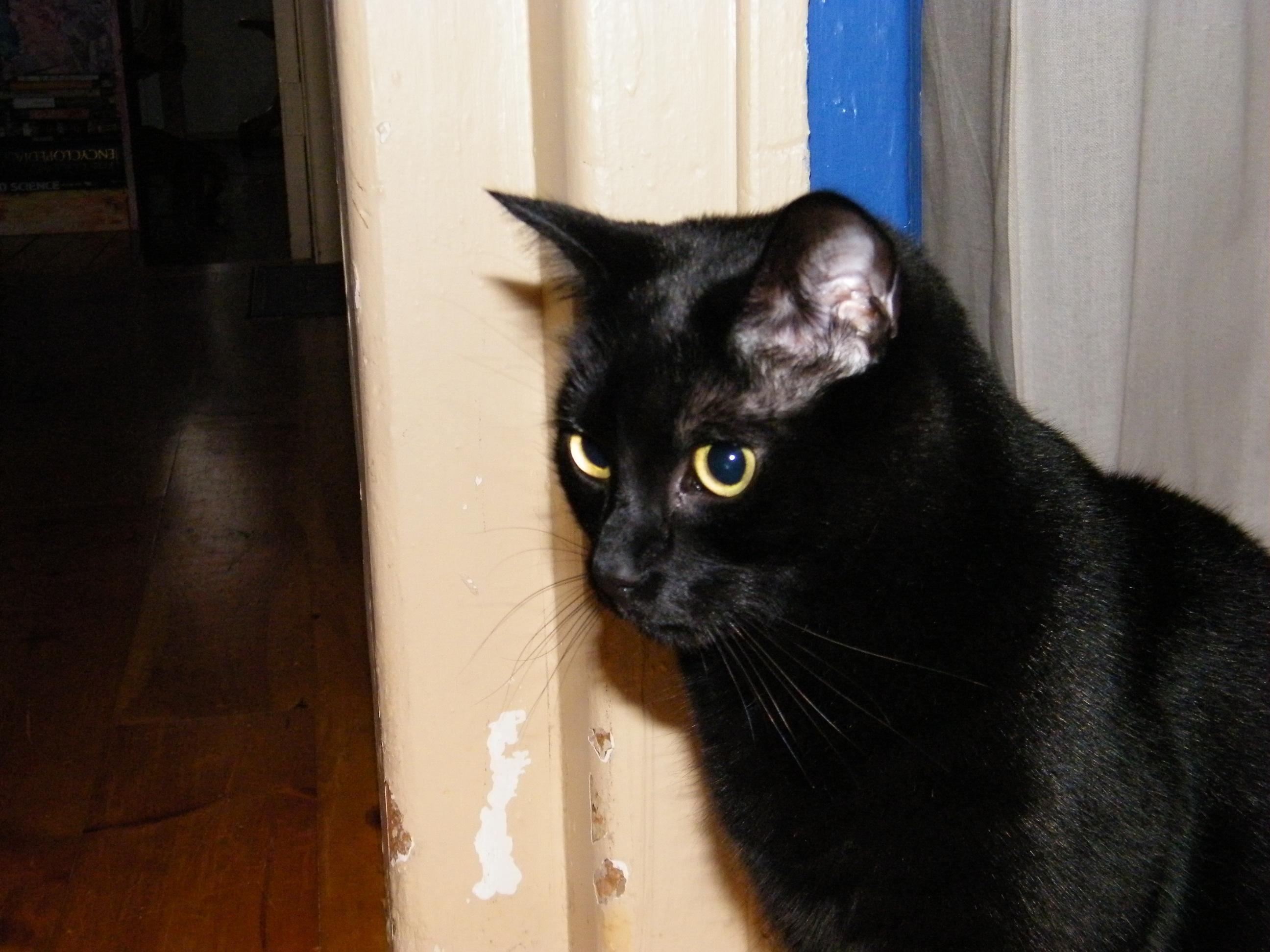 Cats Eyes  Uptobox