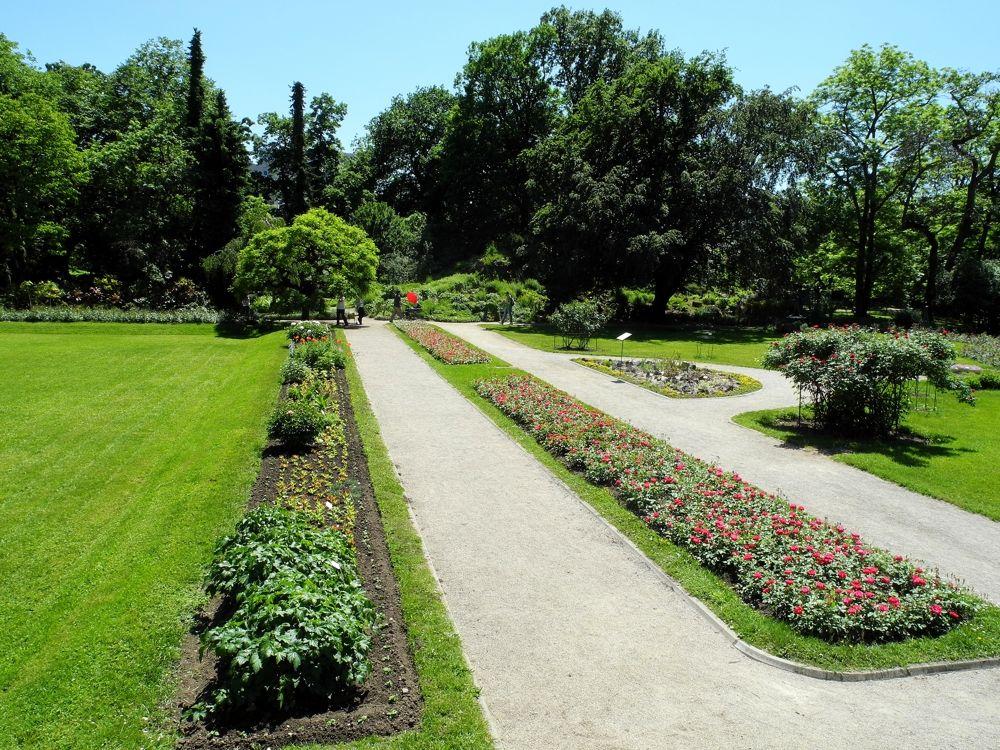 File Botanicki Vrt Pmf Zagreb 16052013 2 Roberta F Jpg Wikimedia