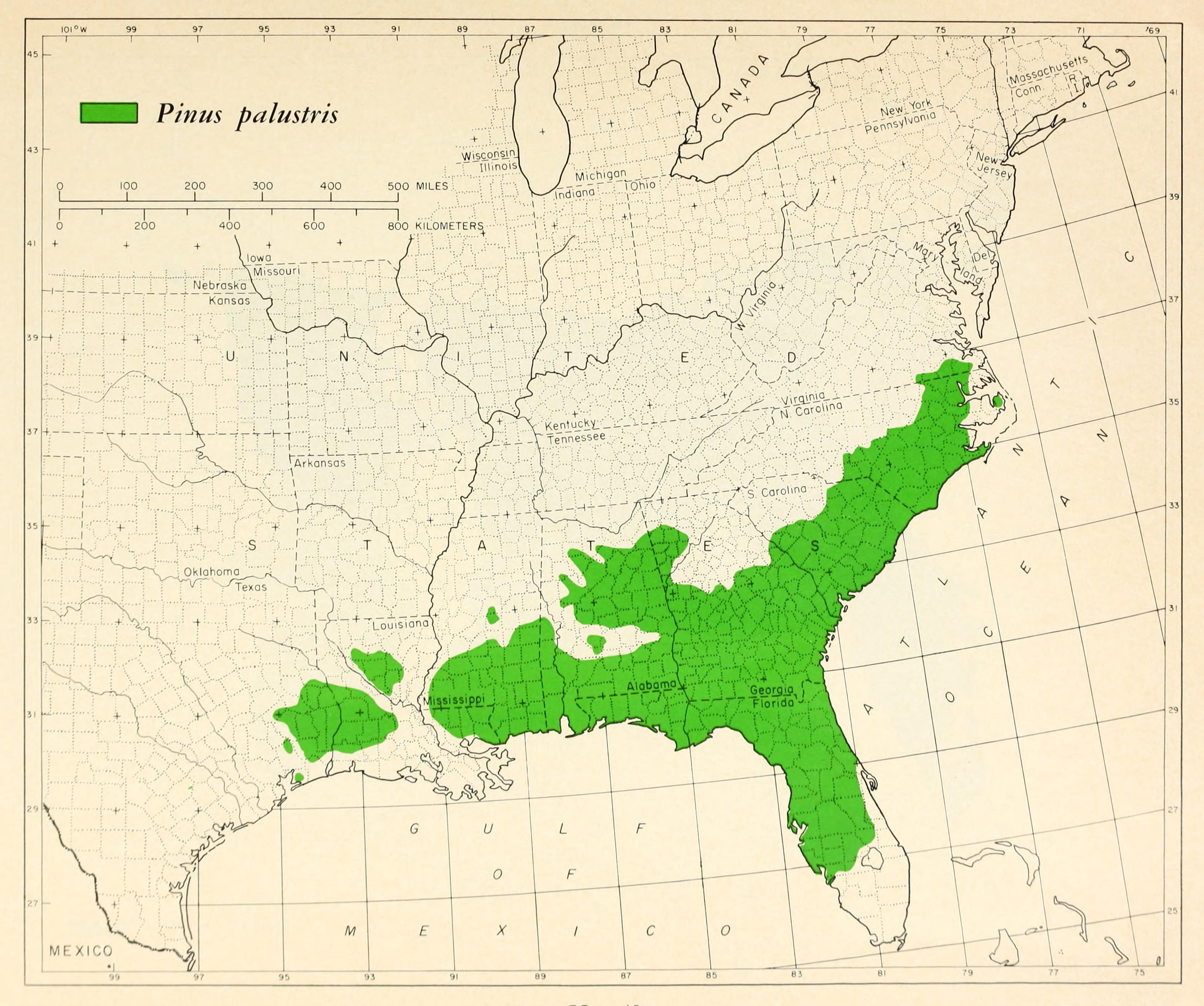 FileCL Pinus Palustris Range Mappng Wikimedia Commons - Us map 12 40