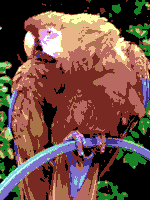CommodoreVIC20 palette sample image.png