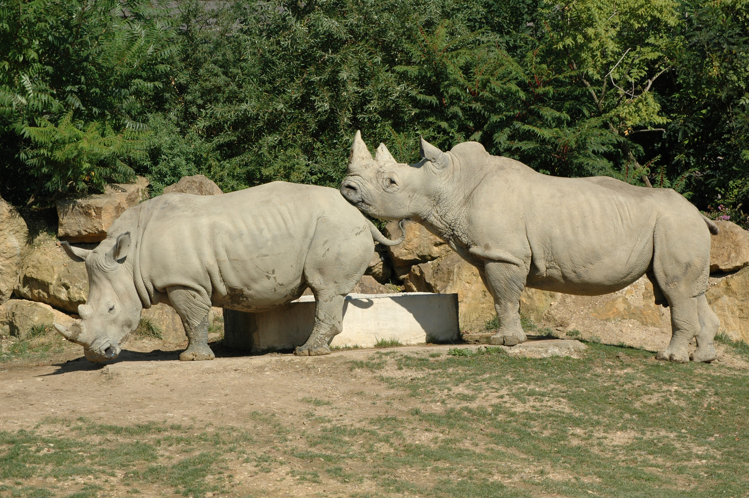 http://upload.wikimedia.org/wikipedia/commons/1/1b/DEUX_RHINOCEROS_0372.JPG