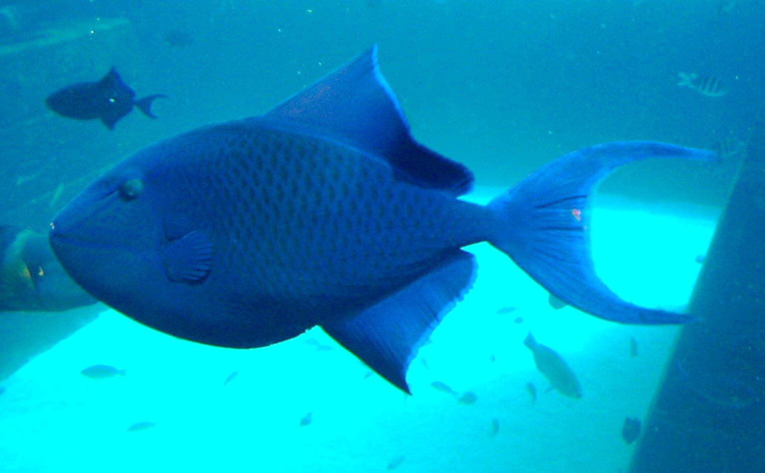 Image Result For Atlantis Aquarium