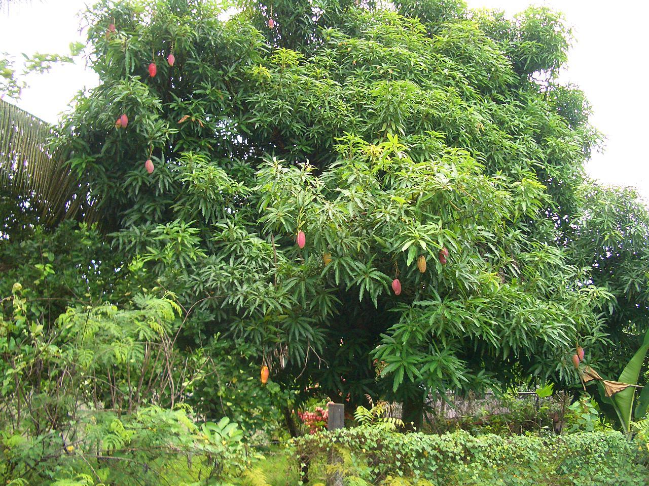 Mango Tree Harrods