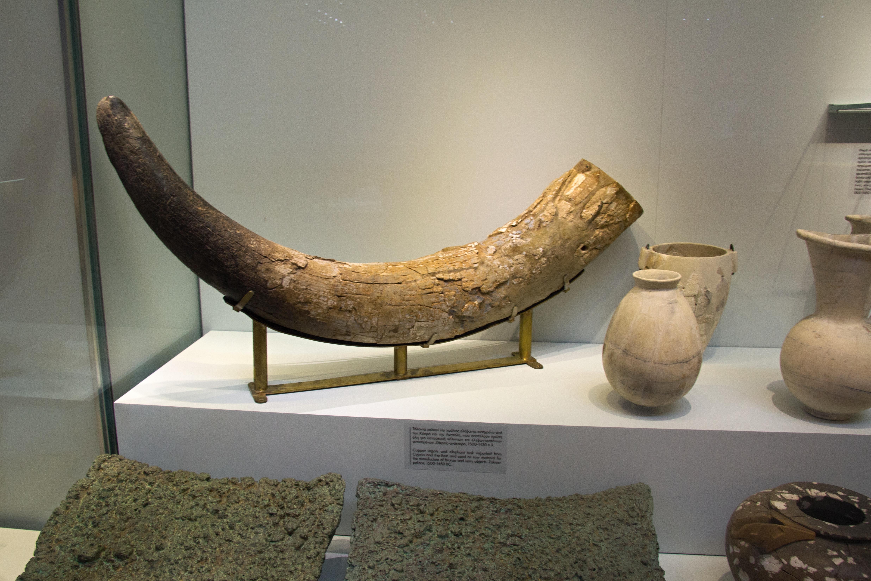 ea7c7396b File Elephant tusk