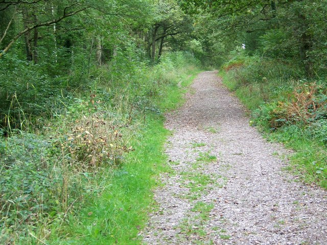 Footpath in Duncliffe Woods - geograph.org.uk - 964584