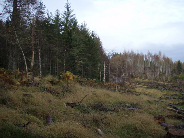 Forest clearing - geograph.org.uk - 614100