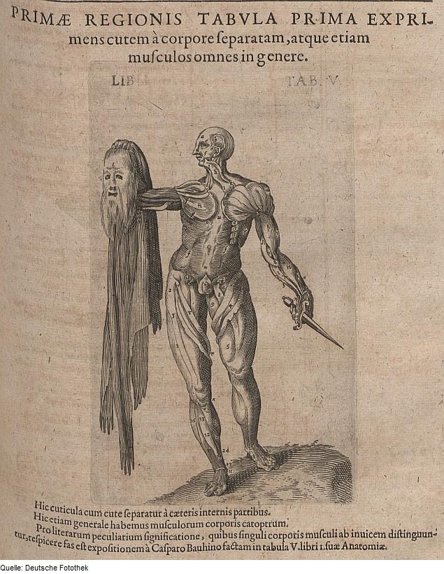 File:Fotothek df tg 0006550 Biologie ^ Anatomie ^ Mensch.jpg ...