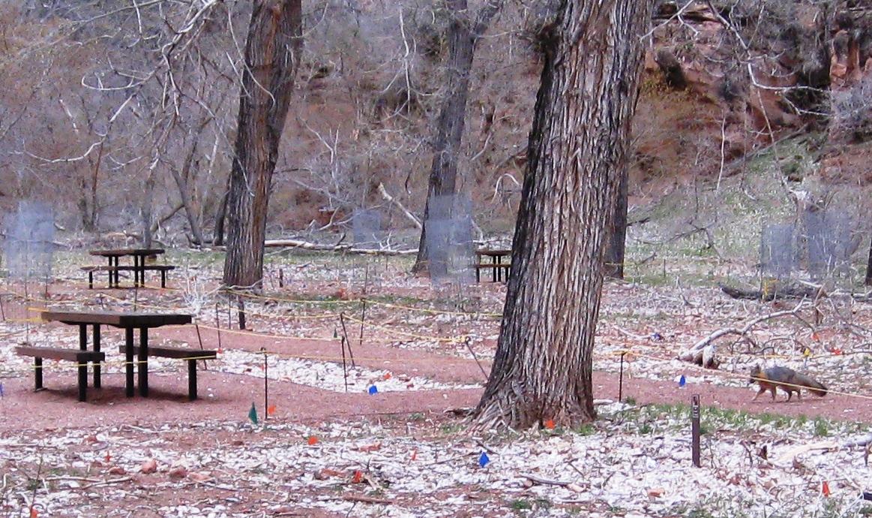File:Fox cleanup patrol - Flickr - brewbooks jpg - Wikimedia