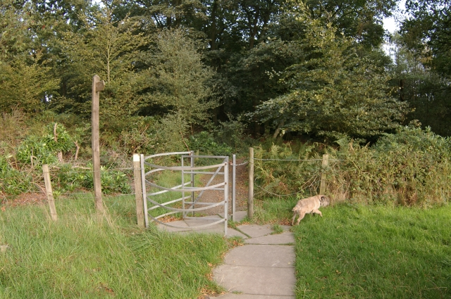 Gate into Witton Park - geograph.org.uk - 349288