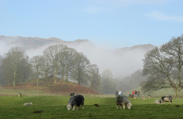 Herdwick sheep near Skelwith Bridge - geograph.org.uk - 1295509