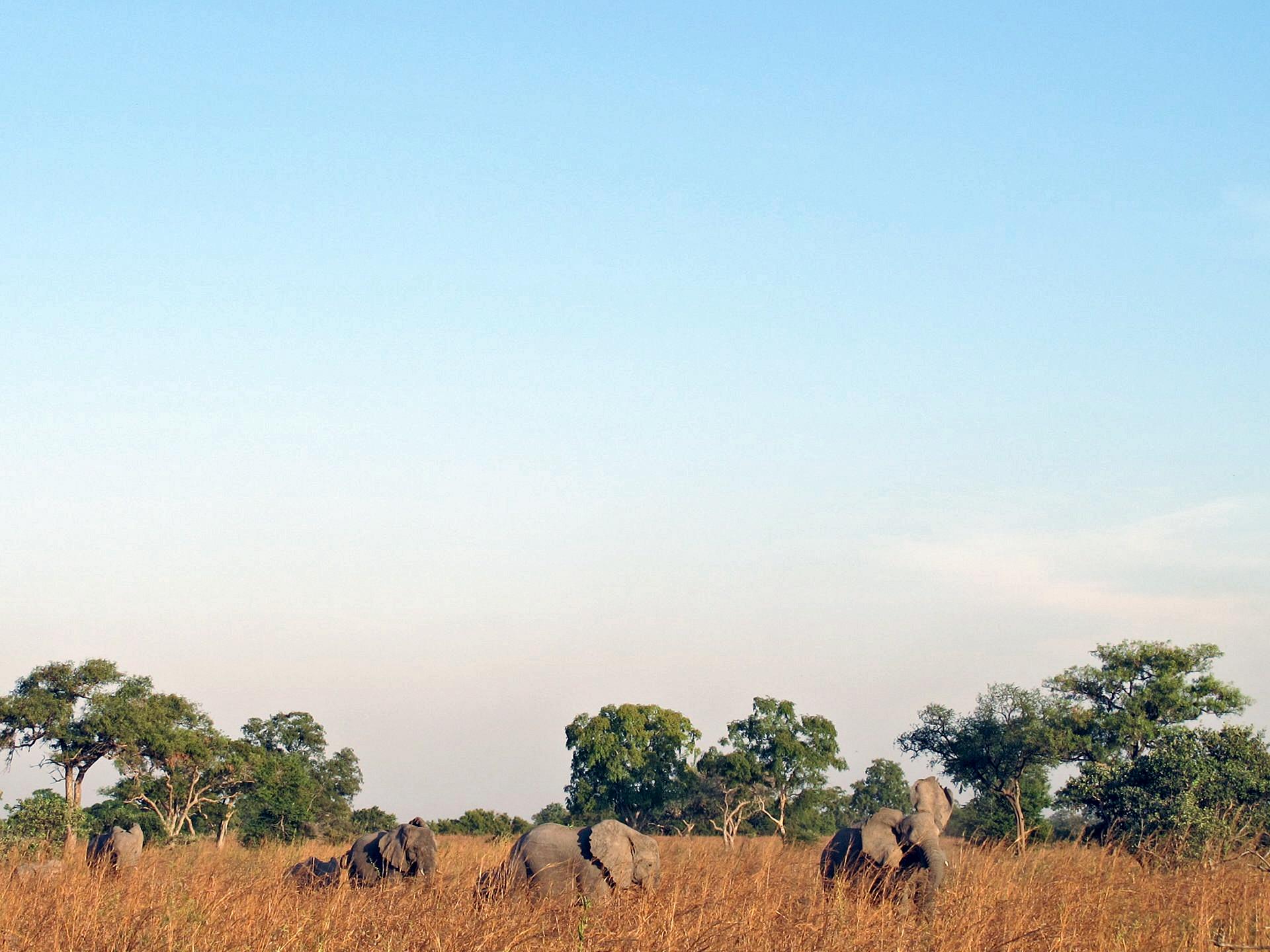 پارک ملی وازا