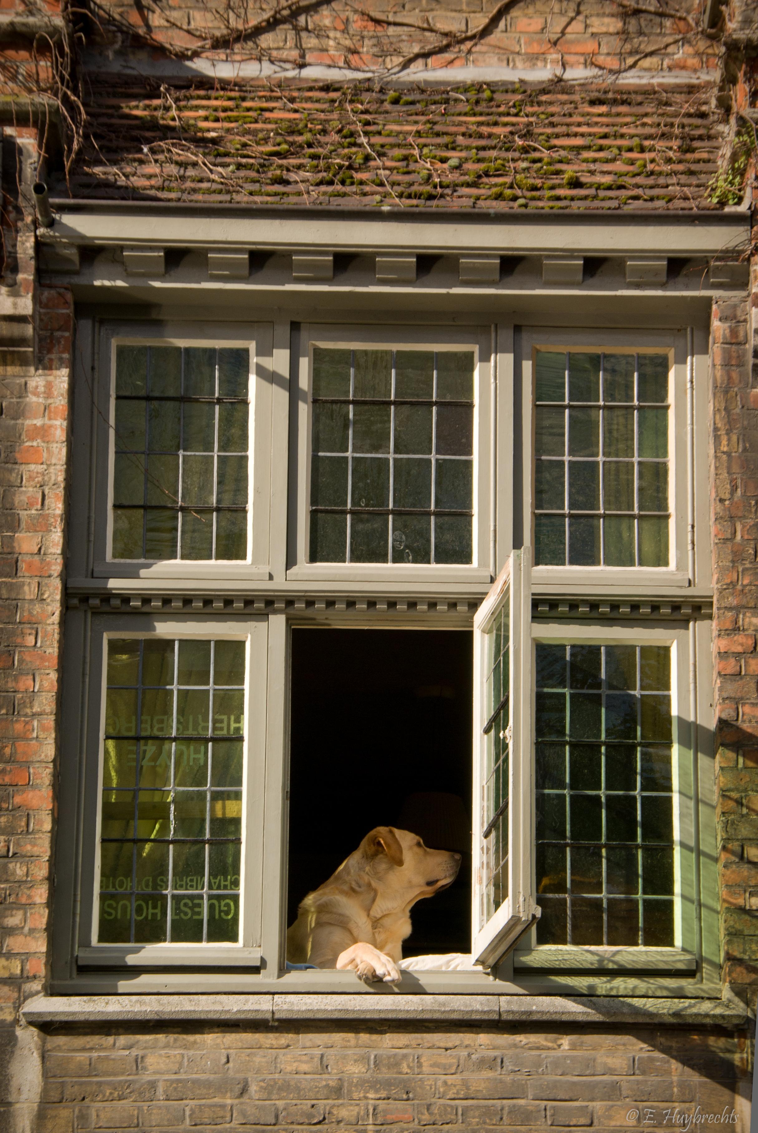 File le chien la fen tre 6204377829 jpg wikimedia for Fenetre wikipedia