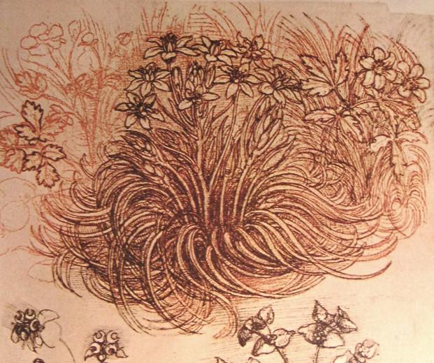 File:Leonardo botanical study.JPG