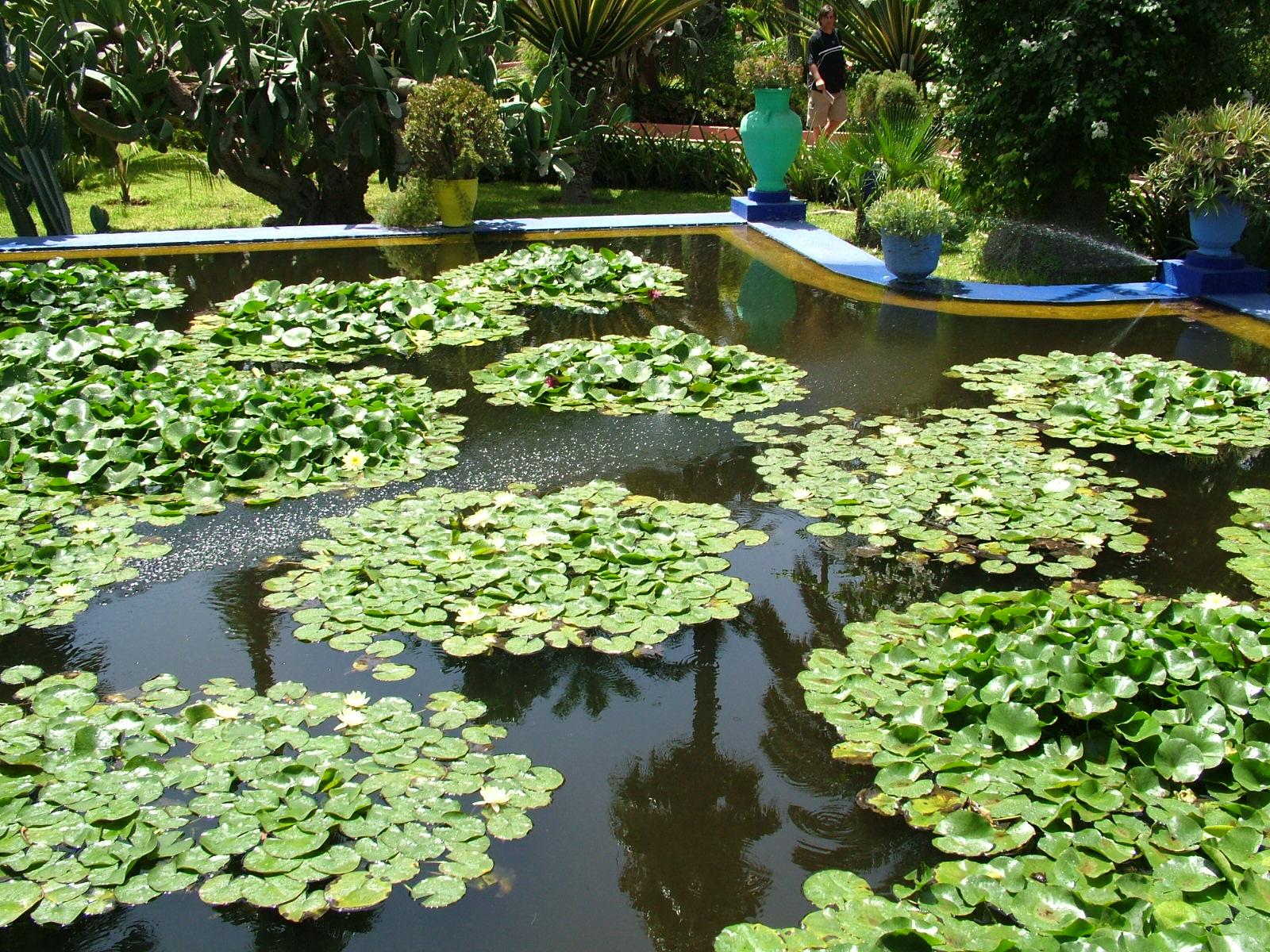 File majorelle garden marrakech wikipedia - Estanque de jardin ...