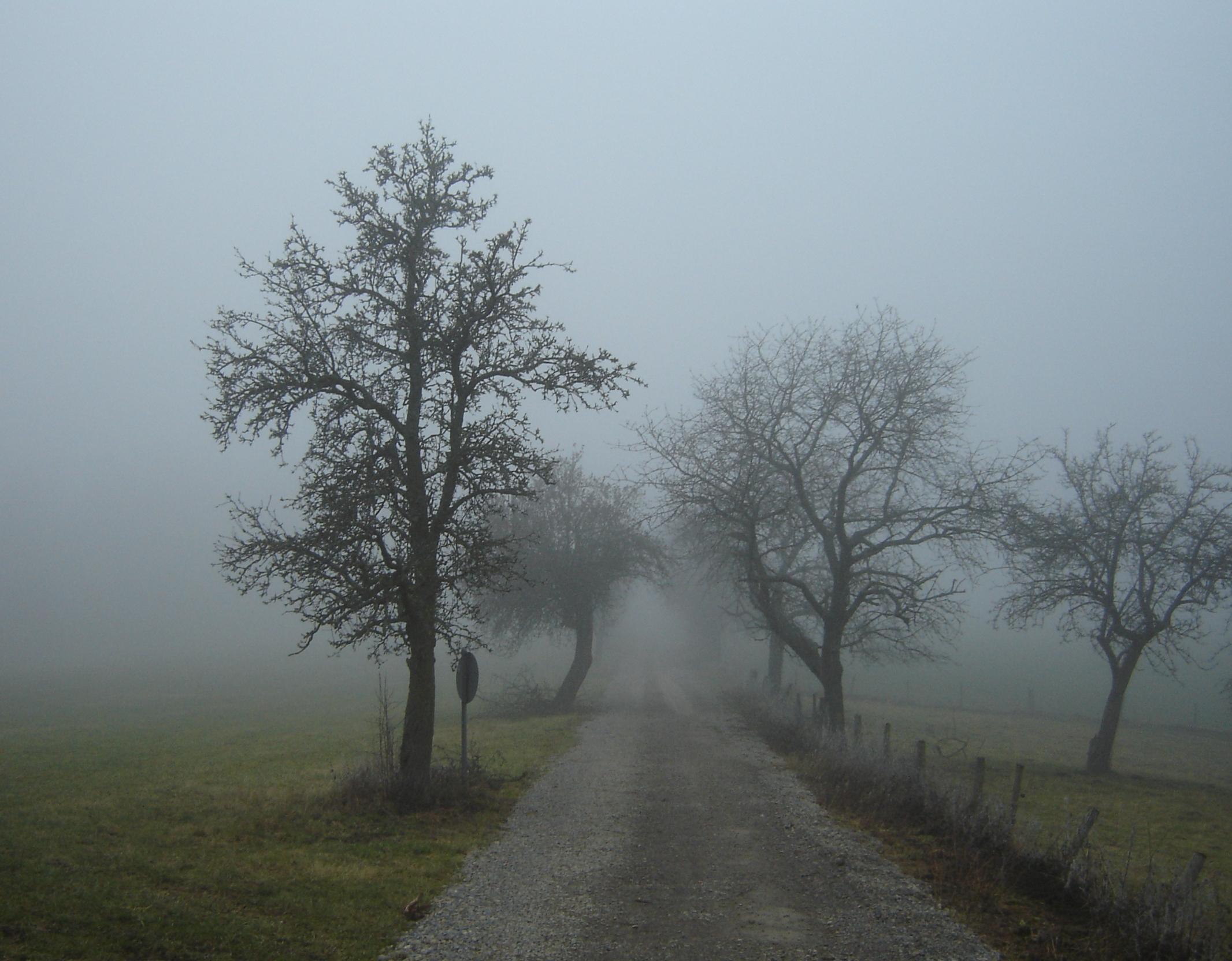 Nebbia - Wikipedia