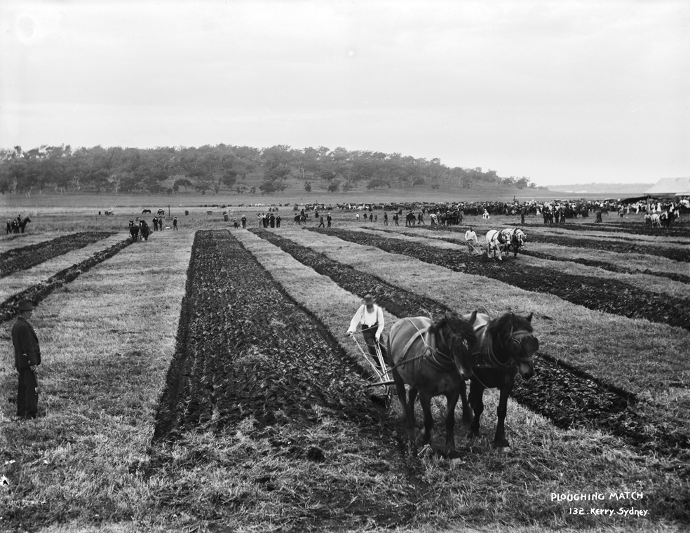 Ploughing match in Sidney