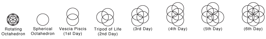 Seed Of Life Stages.jpg