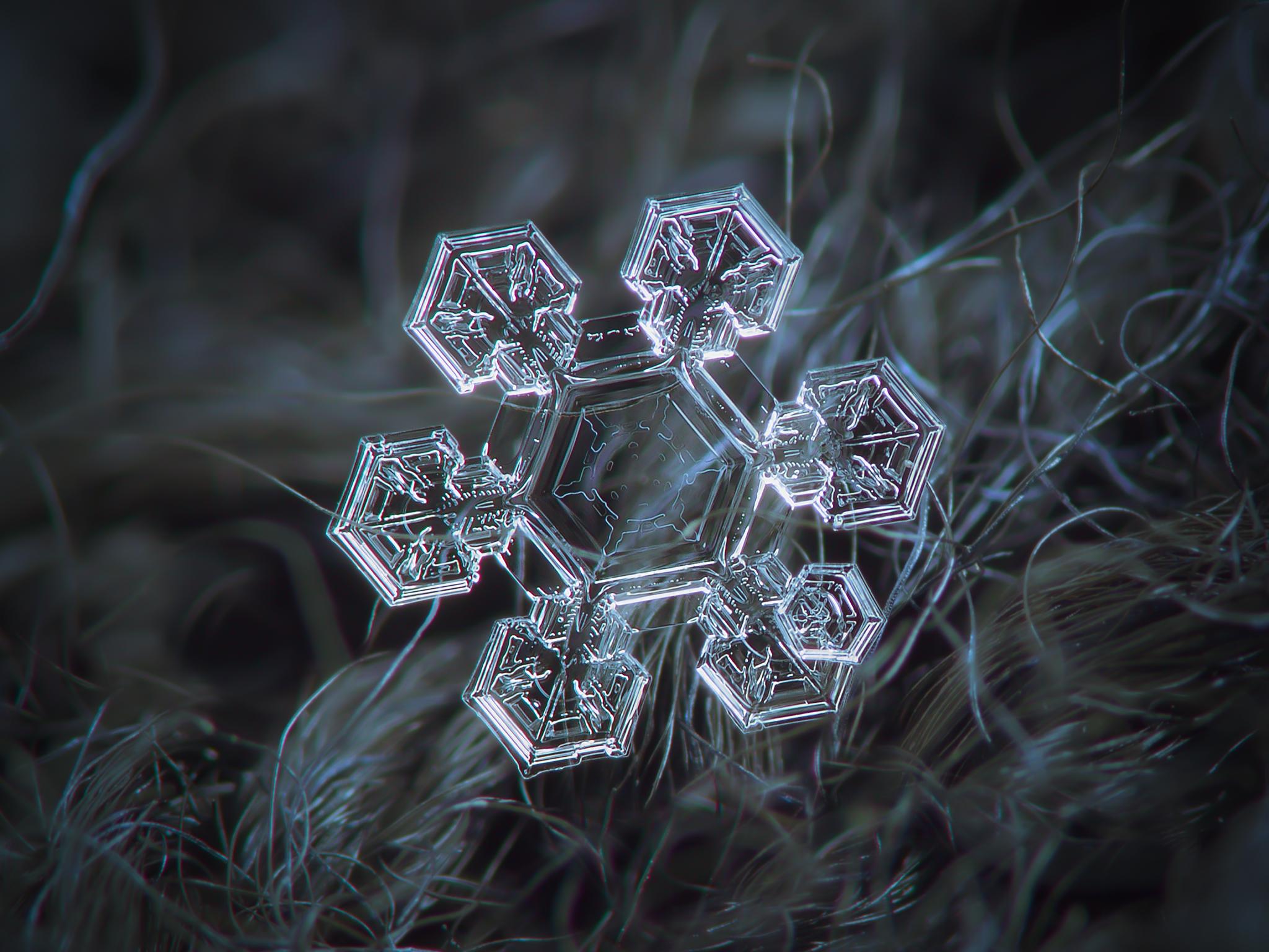 File Snowflake Macro Photography 2 Jpg Wikimedia Commons