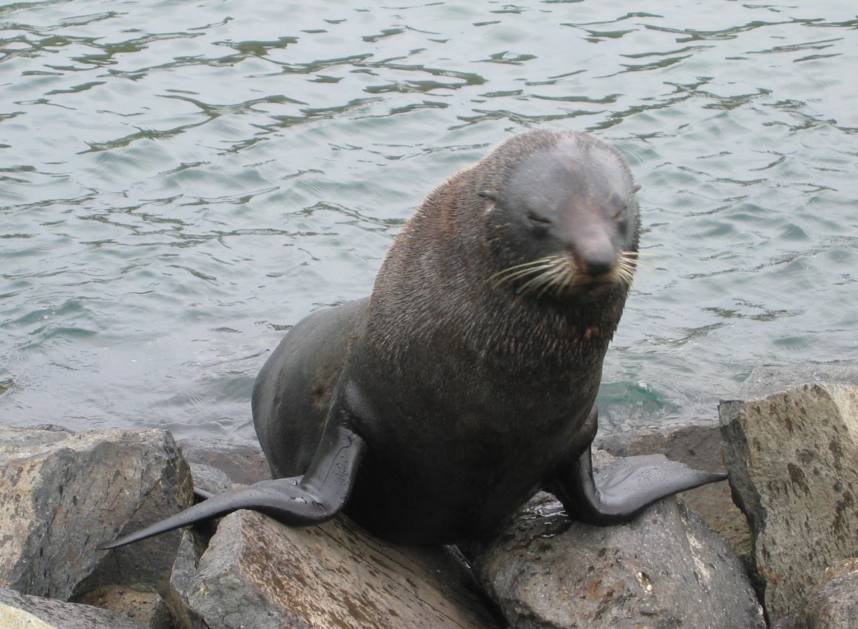 Image Result For Cute Baby Seal