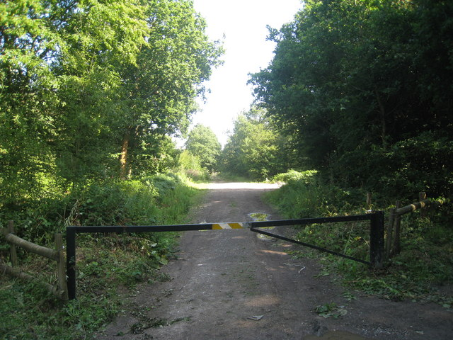 Track through Abbot's Wood - geograph.org.uk - 1425301