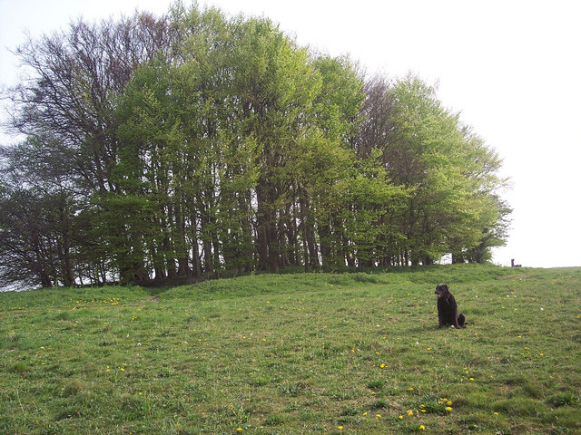 Trees on Win Green - geograph.org.uk - 415185