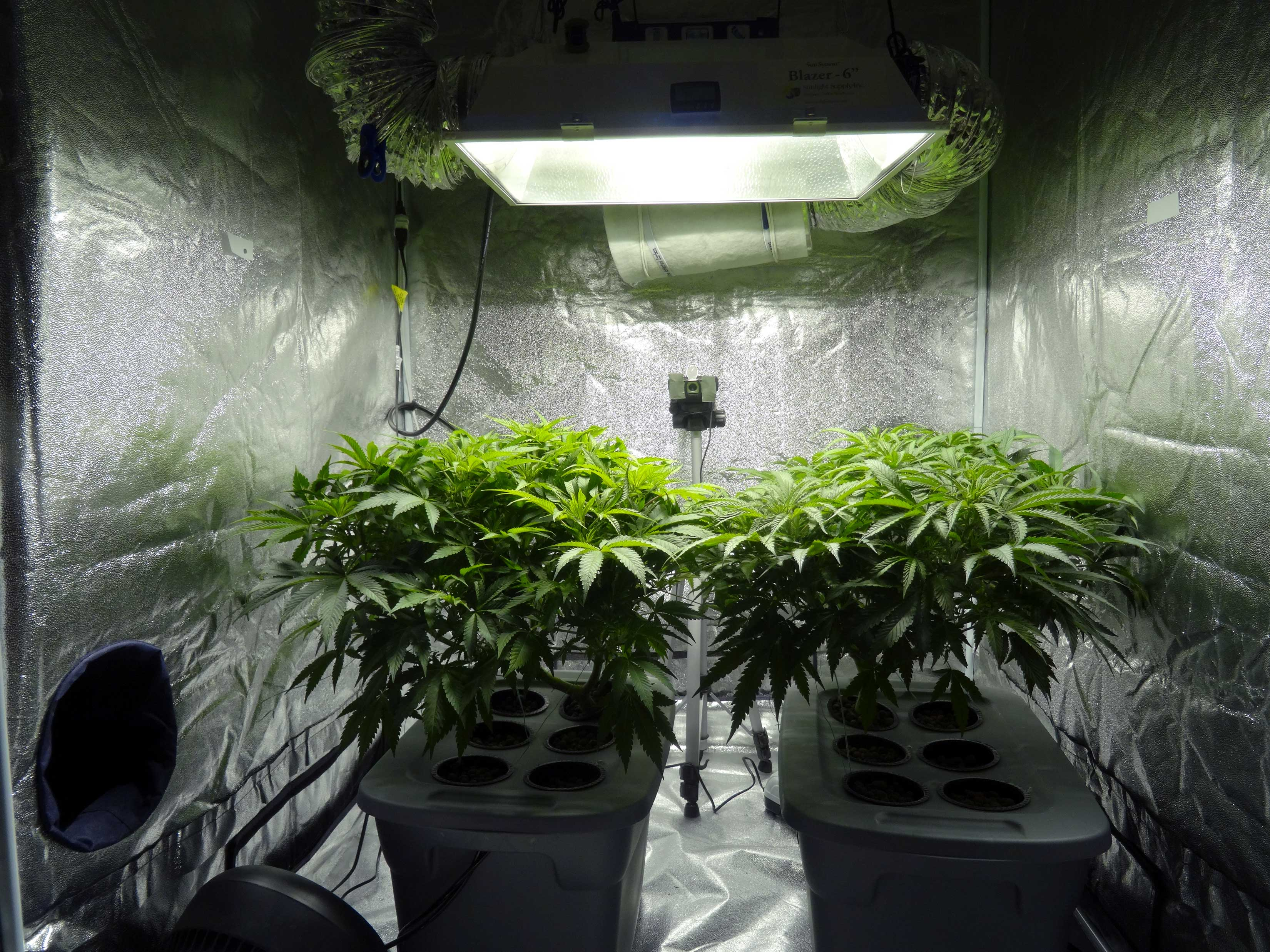 Photo credit & 8 Steps To Building The Perfect Indoor Grow Room