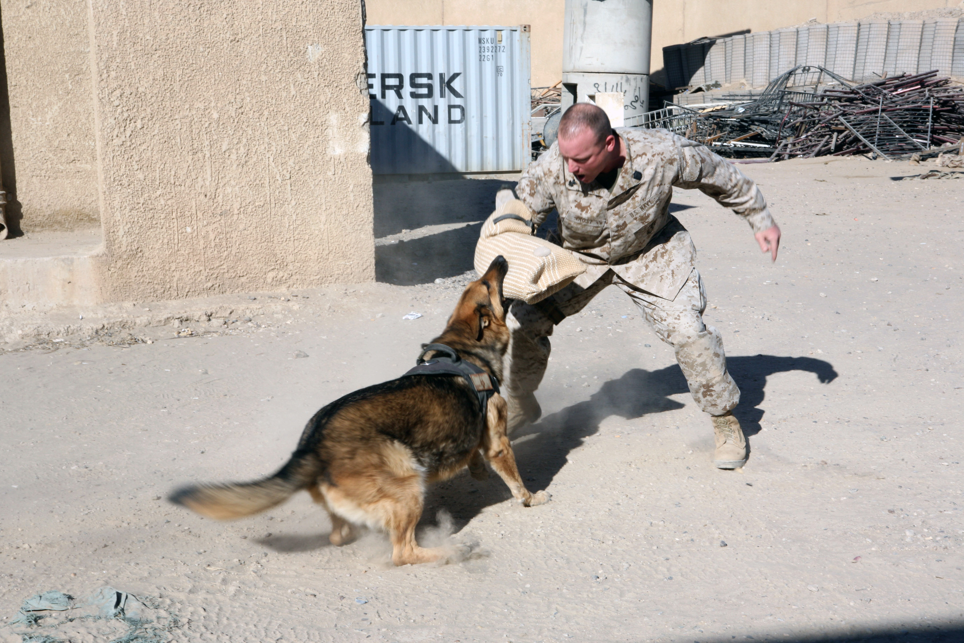Image Result For Well Trained Dogs