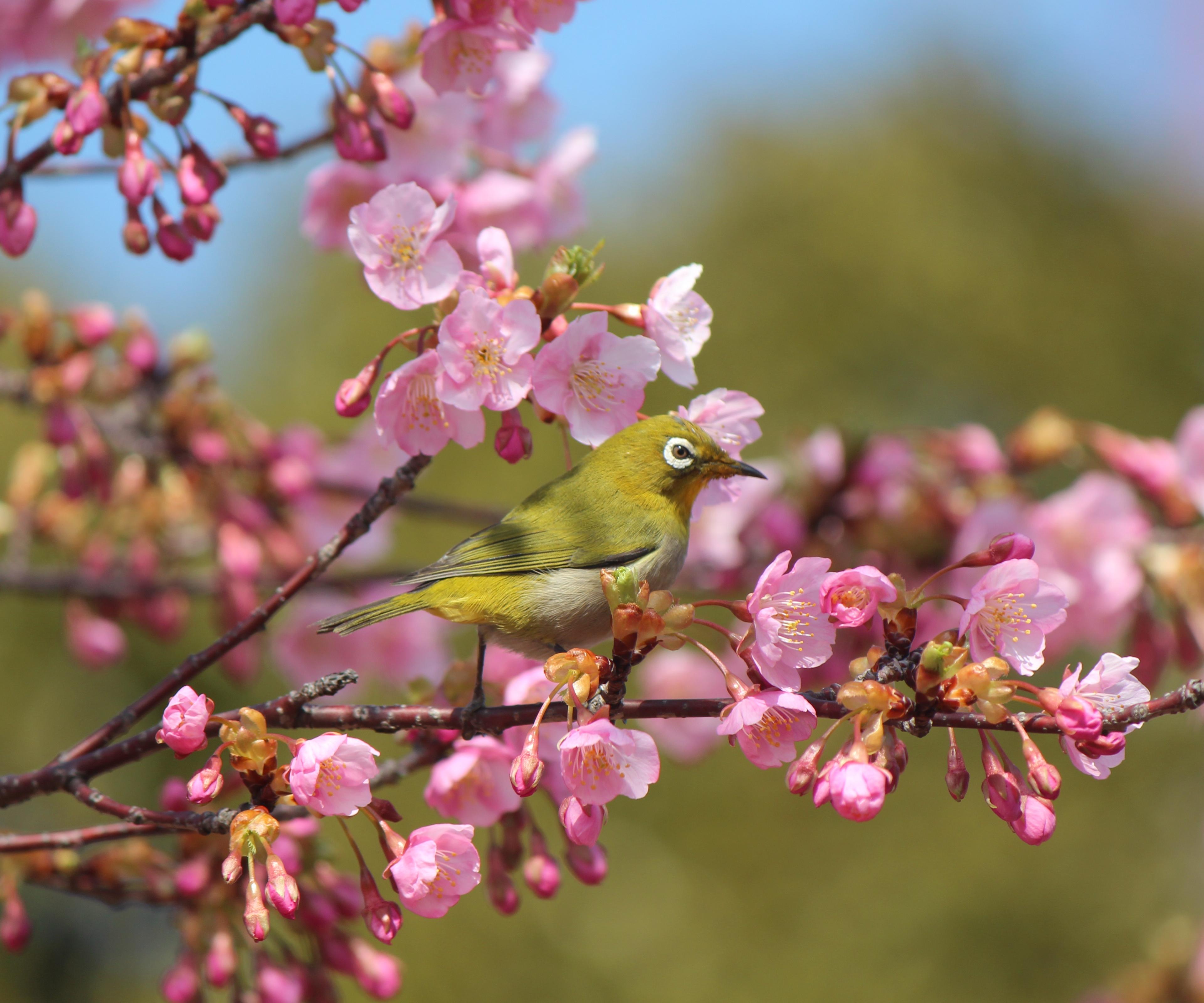 Цветы природа музыка