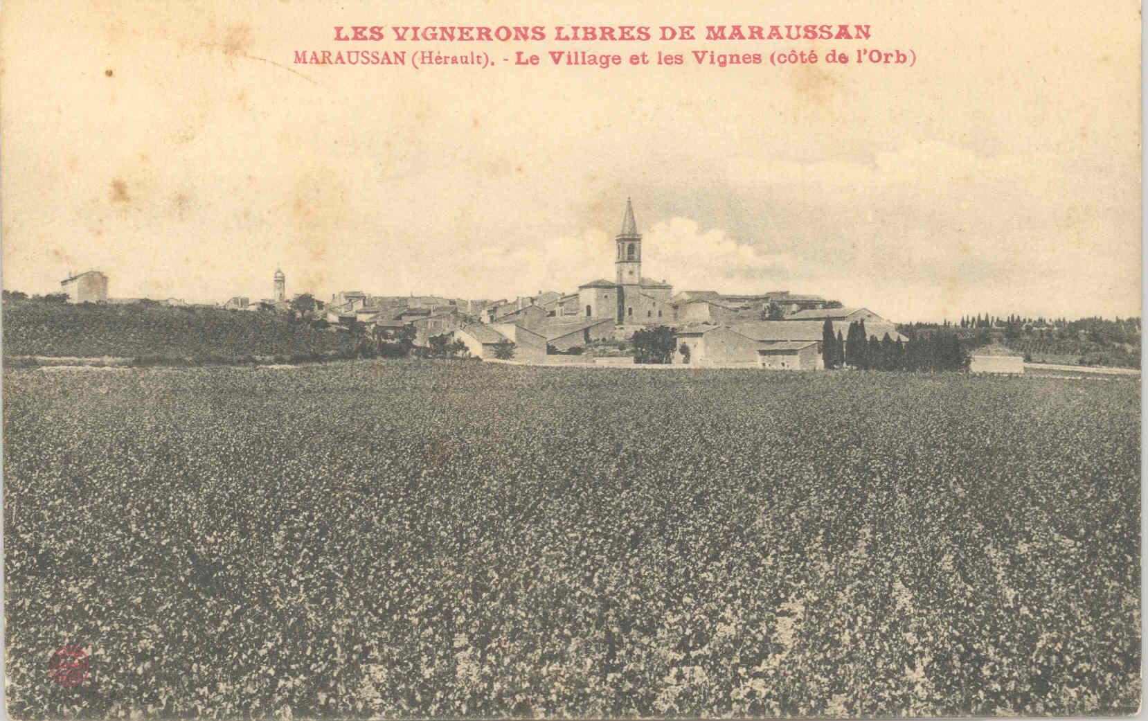 Carte postale ancienne de Maraussan:  le village et les vignes en 1905- Les vignerons libres.