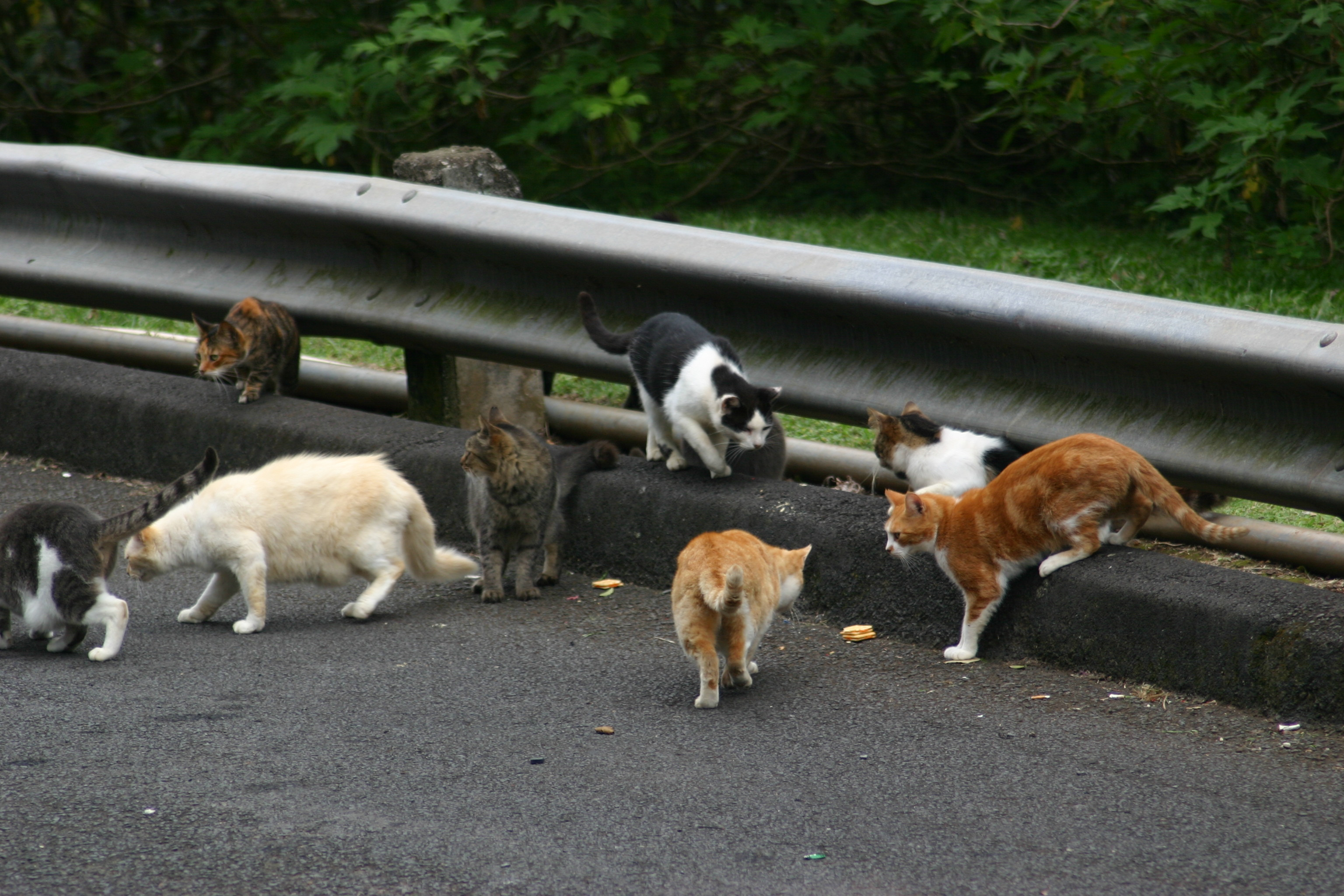 Feral Cats to Be Used Against Rats in New York • Mid Day Daily