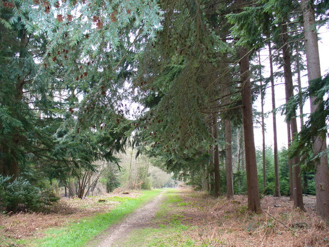 Alice Holt Forest - geograph.org.uk - 383144