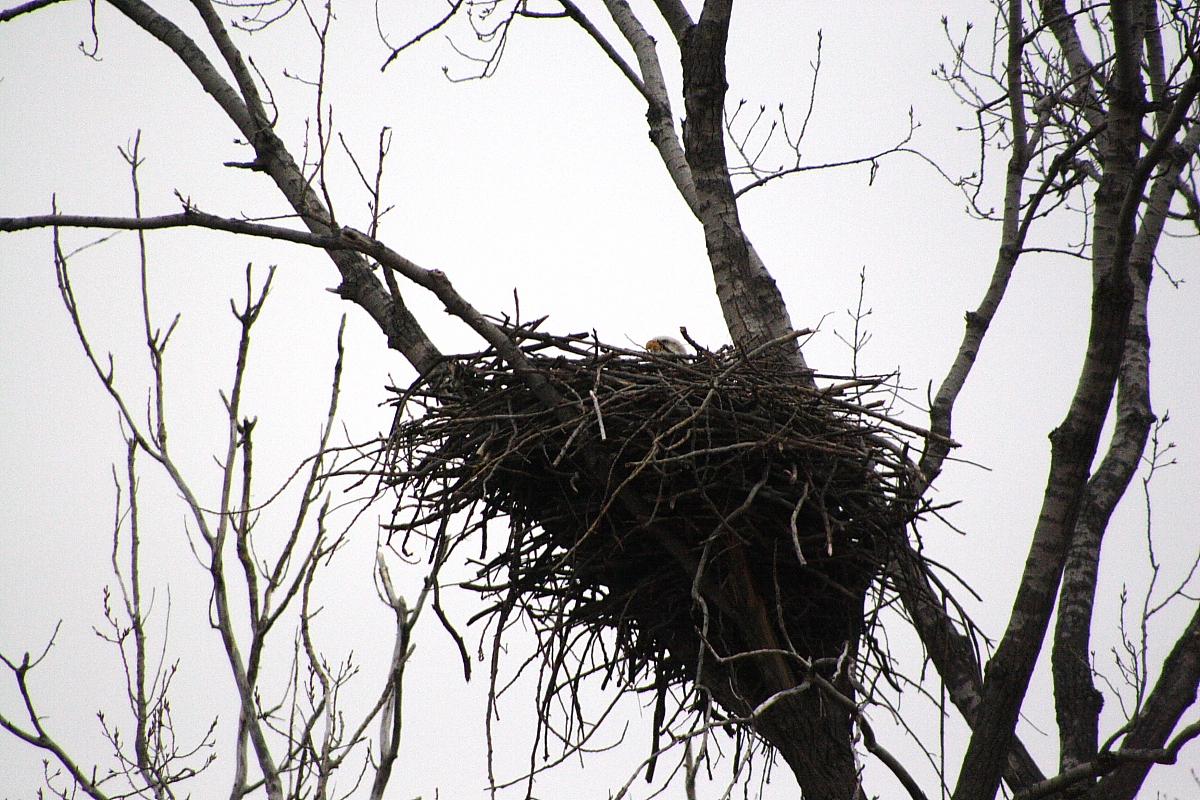 пост картинка гнезда на деревьях сооружение будет